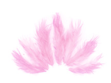 1 Dozen - Solid Light Pink Mini Rooster Chickabou Fluff Whiting Hair Feathers