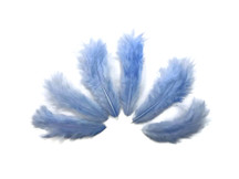 1 Dozen - Solid Light Blue Mini Rooster Chickabou Fluff Whiting Hair Feathers