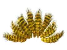 1 Dozen - Golden Olive Grizzly Mini Rooster Chickabou Fluff Whiting Hair Feathers