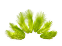 1 Dozen - Solid Lime Green Mini Rooster Chickabou Fluff Whiting Hair Feathers