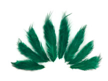 1 Dozen - Solid Peacock Green Mini Rooster Chickabou Fluff Whiting Hair Feathers