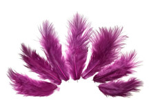 1 Dozen - Solid Magenta Mini Rooster Chickabou Fluff Whiting Hair Feathers