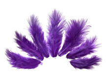 1 Dozen - Solid Purple Mini Rooster Chickabou Fluff Whiting Hair Feathers