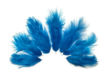 1 Dozen - Solid Turquoise Blue Rooster Chickabou Fluff Mini Feathers