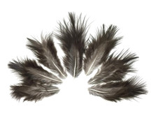 1 Dozen - Natural Black Rooster Chickabou Fluff Feathers
