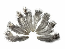 1 Dozen - Unique Grizzly Mini Rooster Chickabou Fluff Whiting Hair Feathers