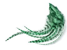 1 Dozen - Medium Mint Green Grizzly Rooster Saddle Whiting Hair Extension Feathers