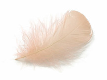 "1 Pack - 2-3"" Champagne Goose Coquille Loose Feathers - 0.35 Oz."