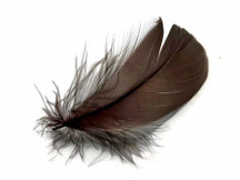 "1 Pack - 2-3"" Brown Goose Coquille Loose Feathers - 0.35 Oz."