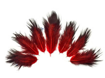 1 Dozen - Solid Red & Black Mini Rooster Chickabou Fluff Whiting Hair Feathers