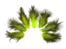 1 Dozen - Solid Chartreuse & Black Mini Rooster Chickabou Fluff Whiting Hair Feathers