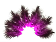 1 Dozen - Solid Magenta & Black Mini Rooster Chickabou Fluff Whiting Hair Feathers