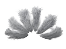 1 Dozen - Solid Gray Mini Rooster Chickabou Fluff Whiting Hair Feathers