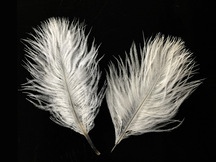1 Pack - Off White Ostrich Small Confetti Feathers 0.3 Oz