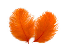 1 Pack - Orange Ostrich Small Confetti Feathers 0.3 Oz