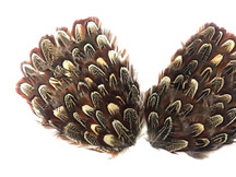 1 Piece - Natural Brown Ringneck Pheasant Almond Feather Pad