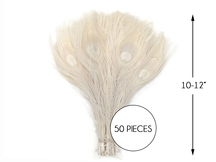 """50 Pieces - Ivory Bleached Peacock Tail Eye Wholesale Feathers 10-12"""" Long (Bulk)"""
