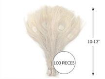 """100 Pieces - Ivory Bleached Peacock Tail Eye Wholesale Feathers 10-12"""" Long (Bulk)"""