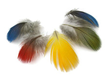 10 Pieces - Mix Mini Parrot & Macaw Body Plumage Feathers