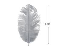 "10 Pieces - 8-10"" Silver Gray Ostrich Dyed Drabs Feathers"