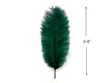 "10 Pieces - 6-8"" Peacock Green Ostrich Dyed Drabs Feathers"