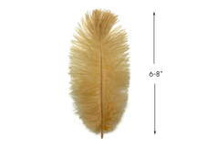 "10 Pieces - 6-8"" Old Gold Ostrich Dyed Drabs Feathers"