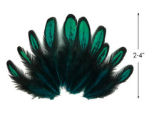 1 Dozen - Peacock Green Whiting Farms Laced Hen Saddle Feathers