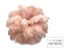 "100 Pieces - 11-13"" Champagne Ostrich Drabs Wholesale Body Feathers (Bulk)"