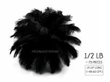 "1/2 Lb - 19-24"" Black Ostrich Extra Long Drab Wholesale Feathers (Bulk)"