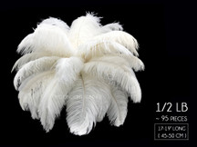 "1/2 Lb - 17-19"" Off White Ostrich Large Drab Wholesale Feathers (Bulk)"