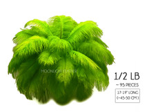 "1/2 Lb - 17-19"" Lime Ostrich Large Drab Wholesale Feathers (Bulk)"