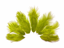 1 Dozen - Solid Olive Mini Rooster Chickabou Fluff Whiting Hair Feathers
