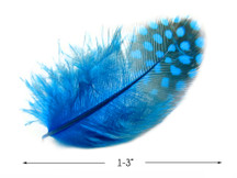 1 Pack - Turquoise Blue Guinea Hen Polka Dot Plumage Feathers 0.10 Oz.