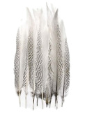 "50 Pieces - 15-20"" Natural Silver Pheasant Tail Wholesale Feathers (Bulk)"