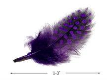 1 Pack - Purple Guinea Hen Polka Dot Plumage Feathers 0.10 Oz.