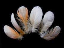 6 Pieces - Small White & Peach Major Mitchell Leadbeater's Cockatoo Plumage Feathers