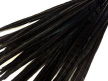 """50 Pieces - 20-22"""" Black Long Ringneck Pheasant Tail Wholesale Feathers (Bulk)"""