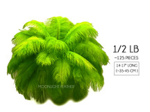 "1/2 Lb - 14-17"" Lime Green Ostrich Large Drab Wholesale Feathers (Bulk)"