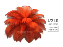 "1/2 Lb - 14-17"" Burnt Orange Ostrich Large Drab Wholesale Feathers (Bulk)"