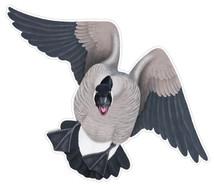 Canada Goose #1 Decal