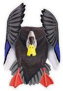 Black Duck Drake #4 Decal