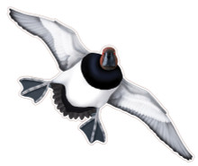 NEW! Canvasback Drake #5 Decal