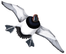 Canvasback Drake #5 PVC Garage Duck