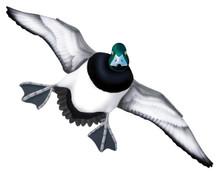 Greater Scaup Drake #5 PVC Garage Duck