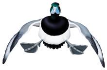 Greater Scaup Drake #2 PVC Garage Duck