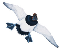NEW! Canvasback Drake #5 Hand Painted Original