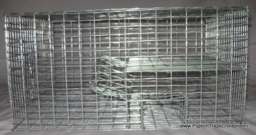 QSP1 Sparrow Trap Deluxe