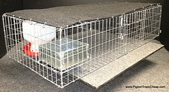 QPT3516SWF Pigeon Trap - Medium, Humane