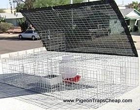 QPT4624SWF Pigeon Trap - Large, Humane