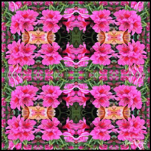 Debbie Millington Delphiniums Pink 65 Scarf